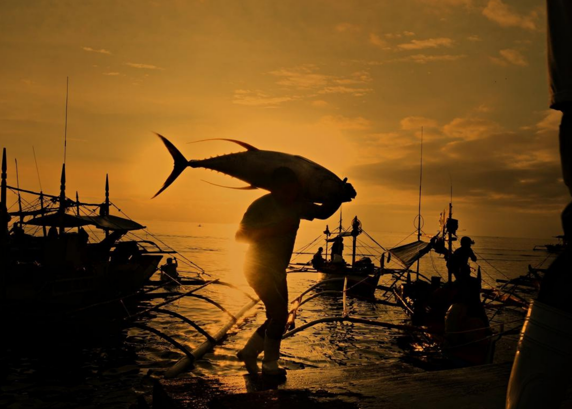 Fisherman carries large catch across dock at sunset